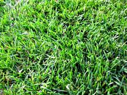 Fine Fescue Lawn Installation Melbourne